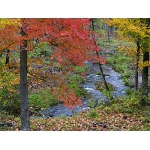 Coles Creek lined Autumn Maple Trees, Houghton, Michigan