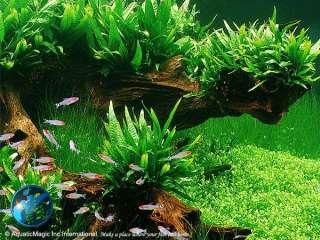 Aquatic Magic   Aquarium Plants, Moss, Pots, Aquarium Fish, Prawns and