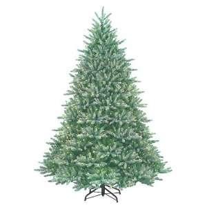 6.5 Blue/Green Just Cut Natural Frasier Fir Christmas