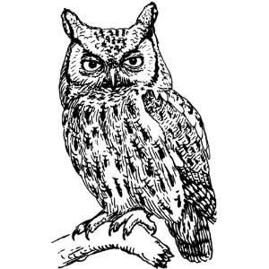 4 inch Square Acrylic Coaster Line Drawing Owl: Home & Kitchen