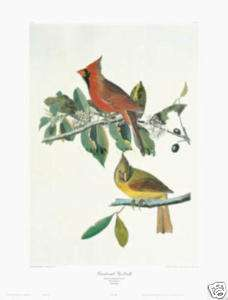 Cardinal Grosbeak by John James Audubon RED BIRDS