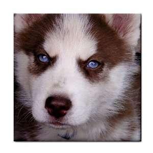 Siberian Husky Puppy Dog 17 Tile Coasters (Set/4) HH0631