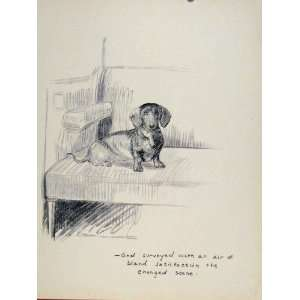 Dog Hound Pet Stare Animal Sketch Drawing Art Old Print
